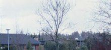 Østervangsskolen og Blomstervejskvarteret
