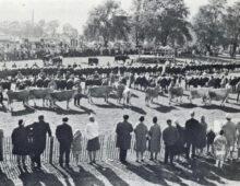 Roskilde Dyrskue i 50 år